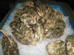 EFC Oyster