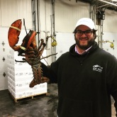 10 lb. lobster